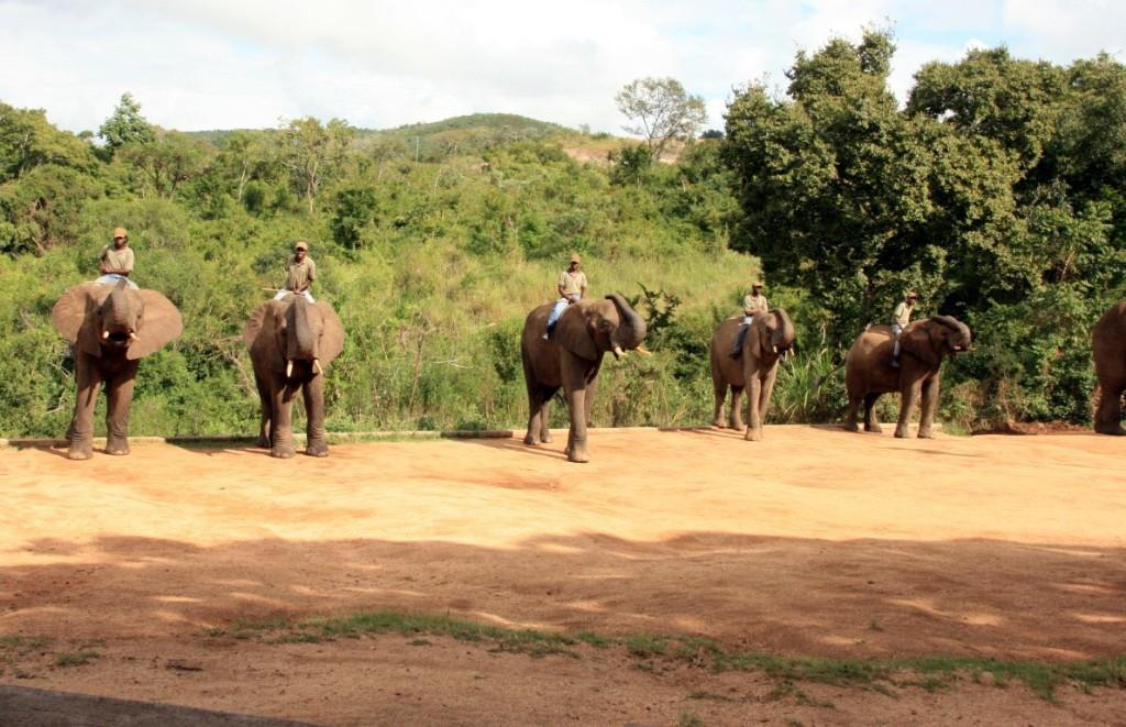 Elefantenflüsterer in Hazyview