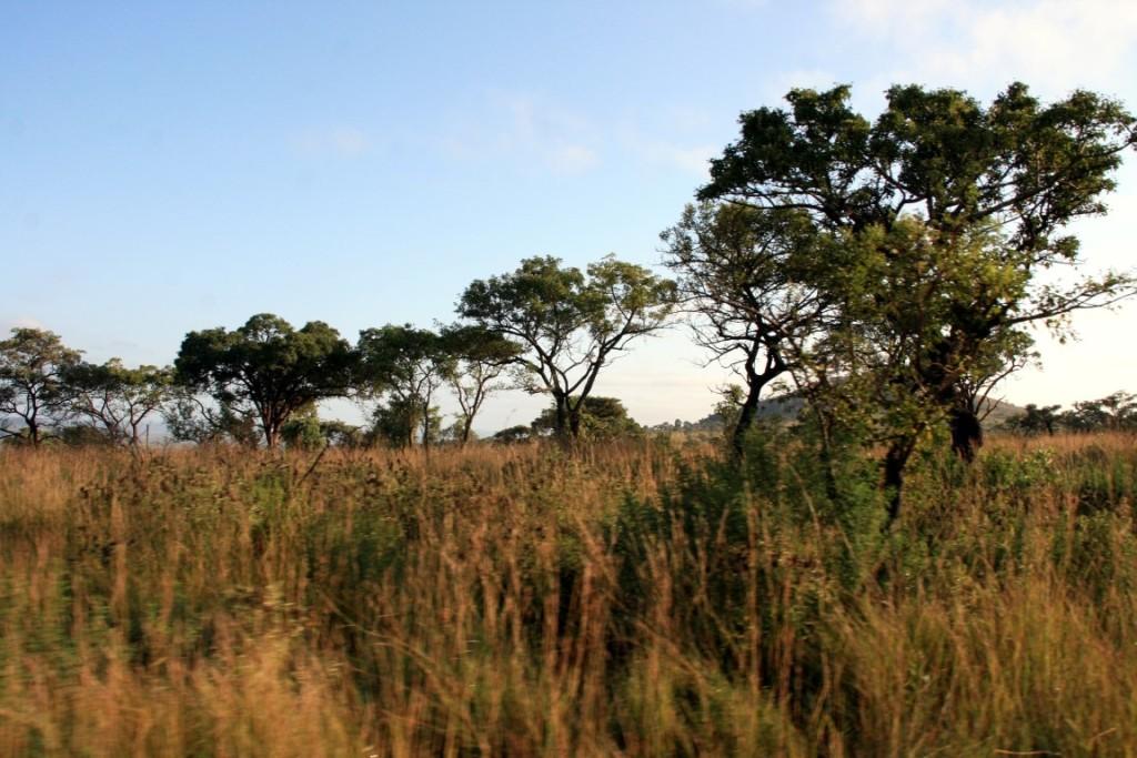 Morgensafari im Kruger Park