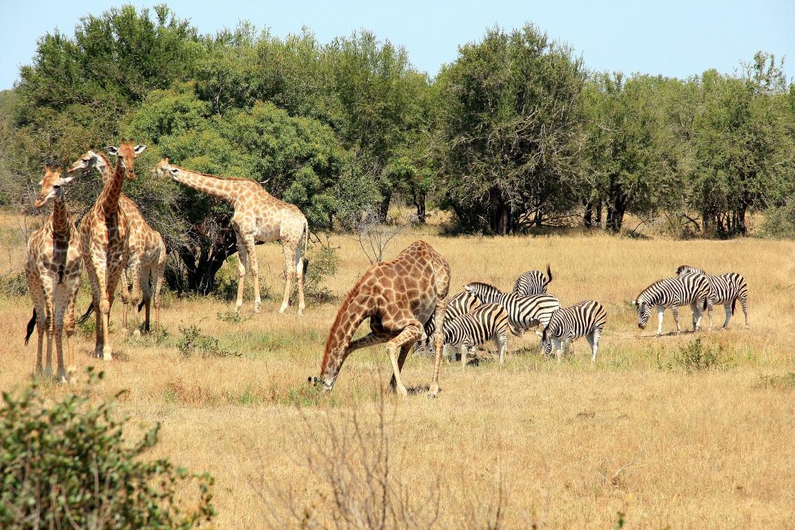 safari-kruger-park-tipps-stressfrei-urlaub-fernreisen
