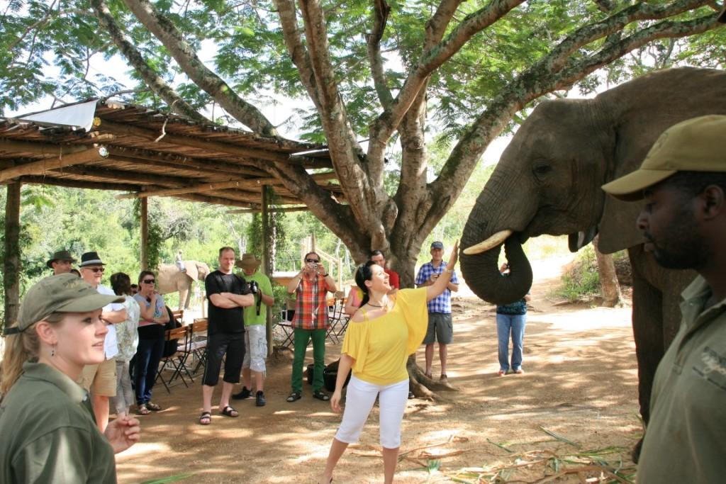 Elefanten-Fütttern in Hazyview