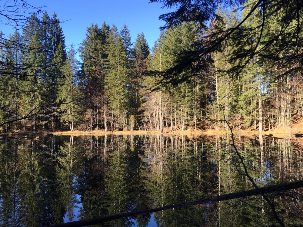 Spiegelungen-Bodensee