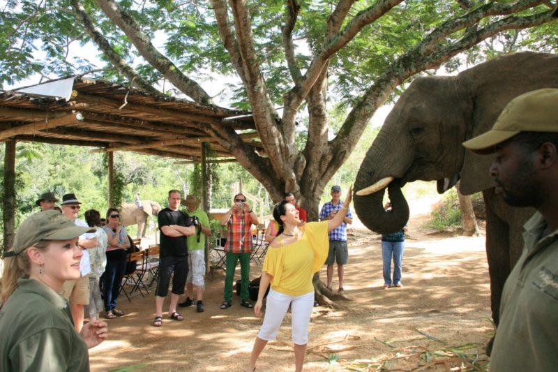 Elefantenfüttern in Hazyview