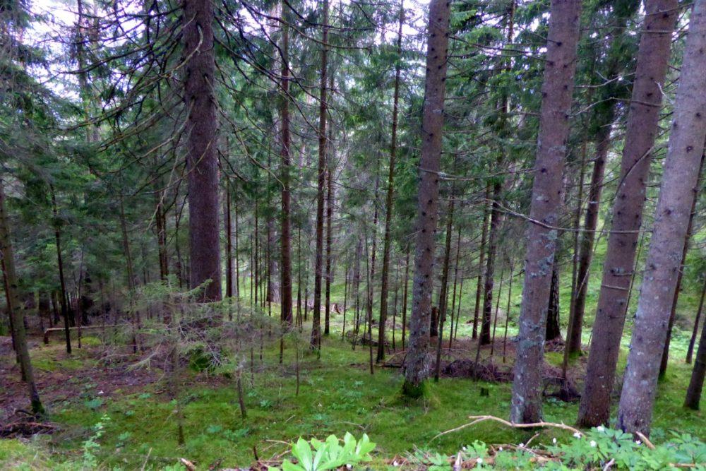 Waldweg-Steben