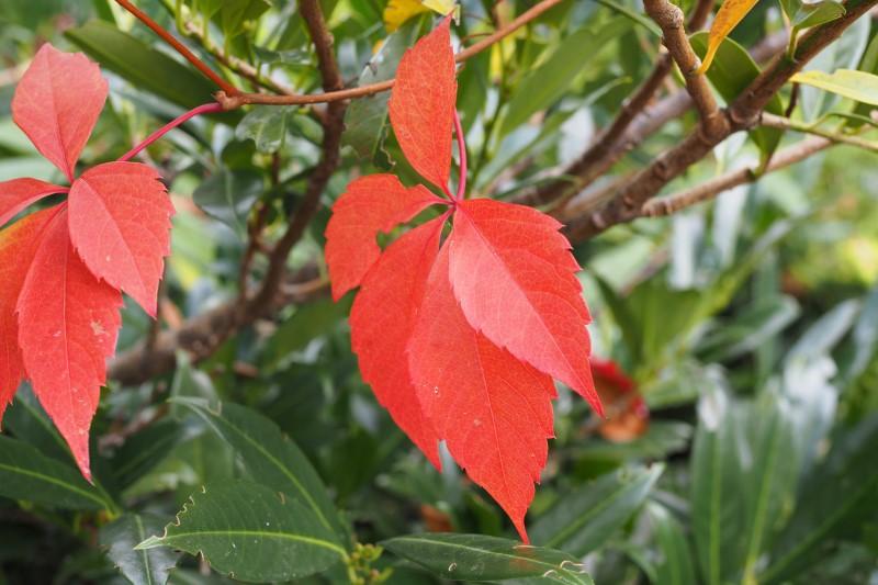 Herbstblätter-Kärnten