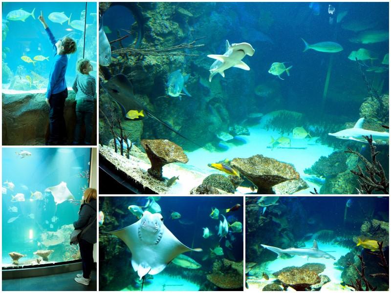 haus-des-meeres-fische