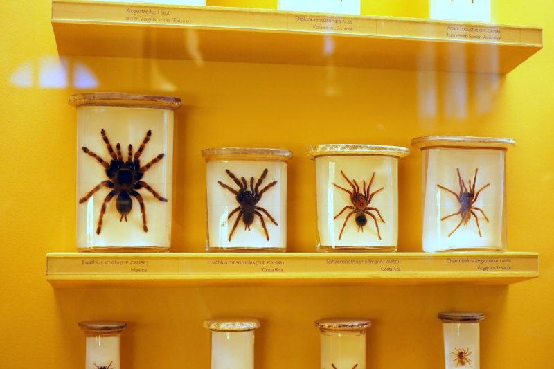 Spinnen im NHM