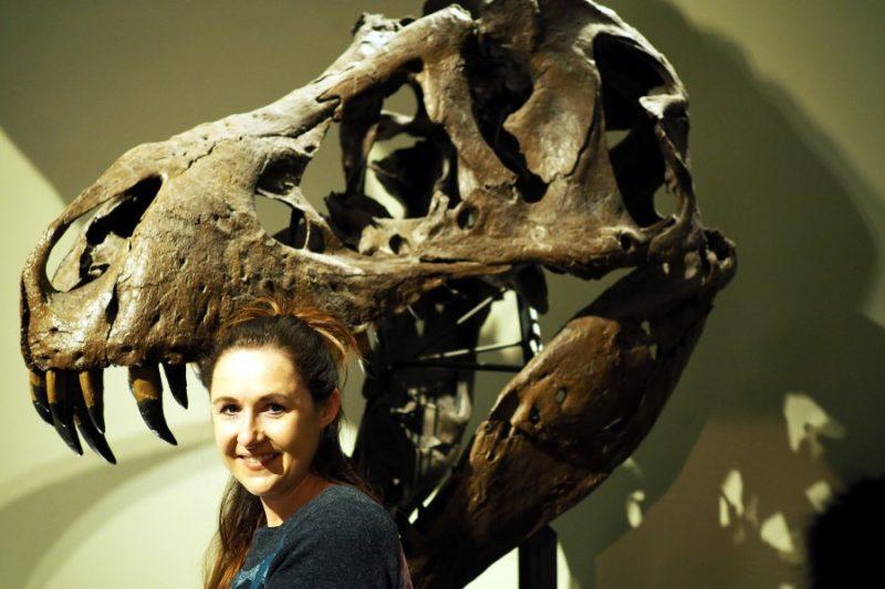 Knochen prähistorischer Tiere