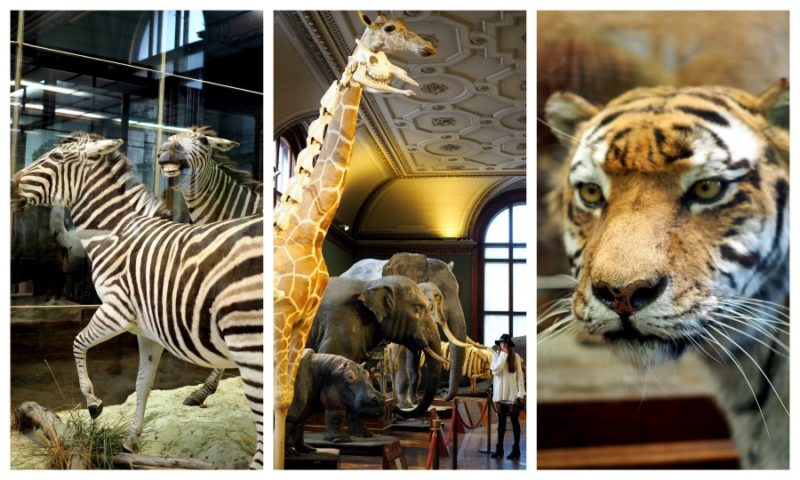 Afrika im Naturhistorischen Museum