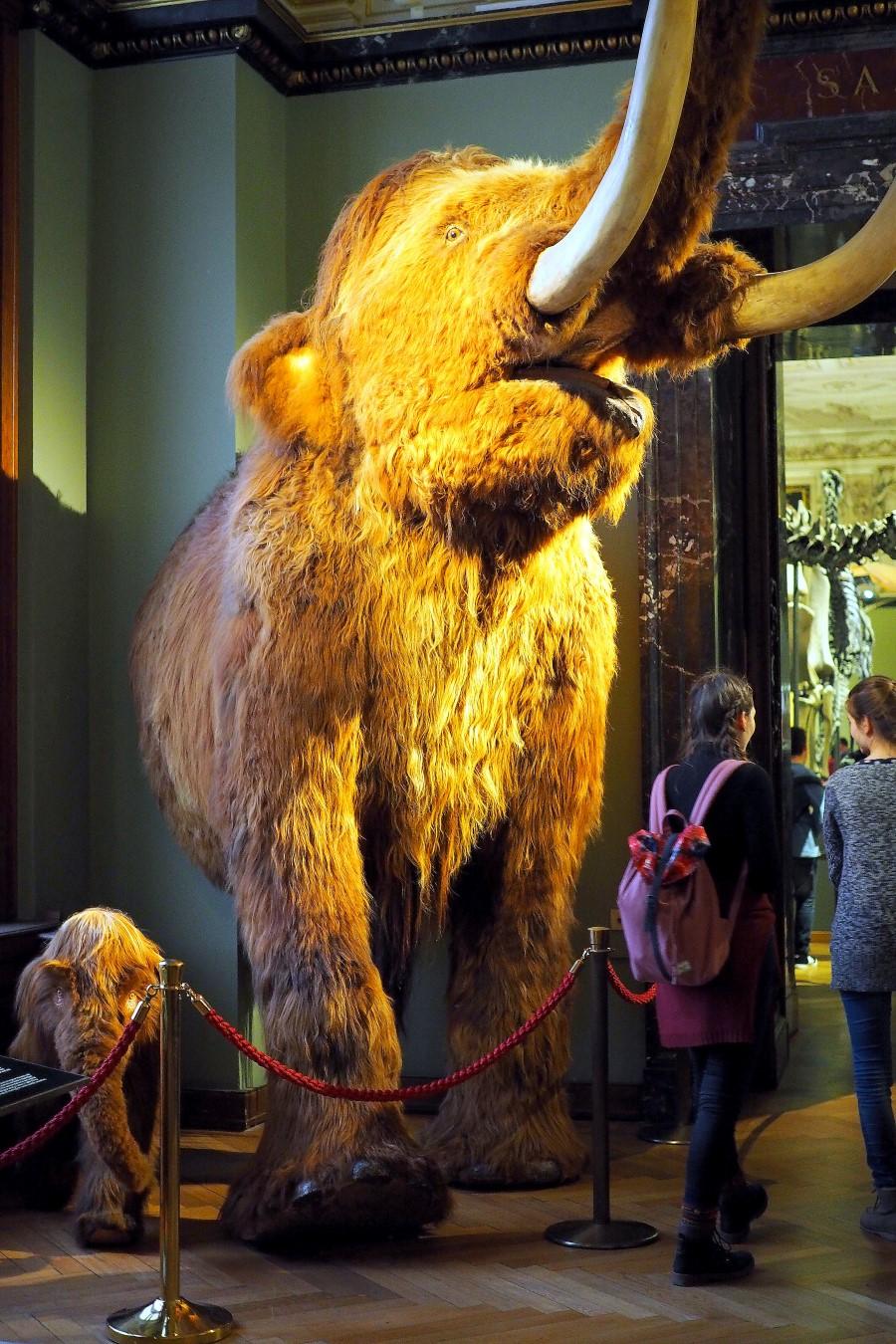 Mammuts in Wien