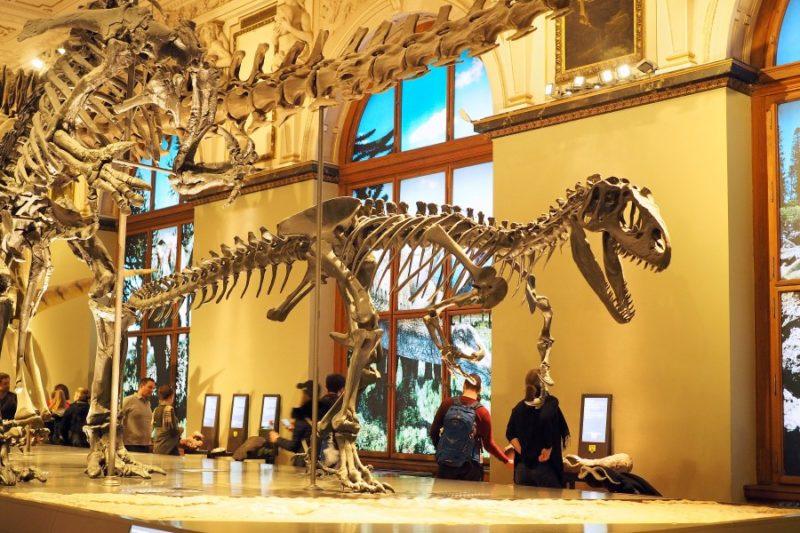 Dinosaurier in Wien treffen