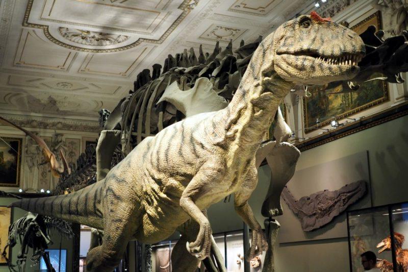 T-Rex Naturhistorisches Museum