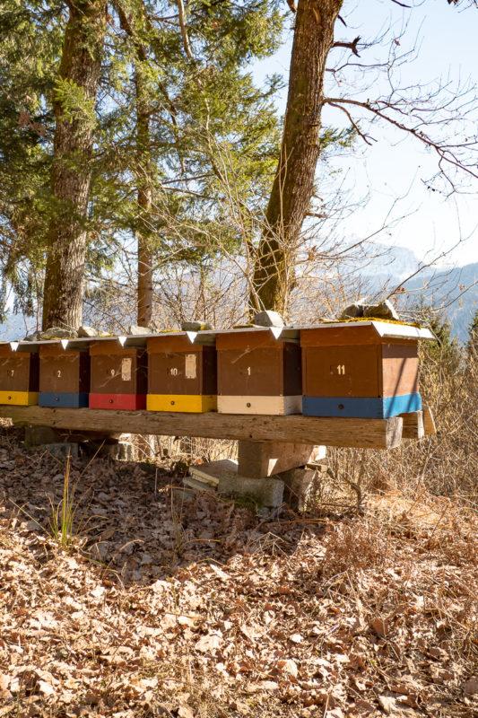 Bienenstöcke am Waldrand