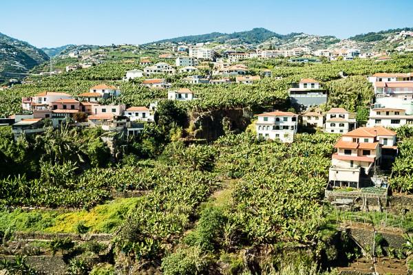 Bananenplantagen Madeira