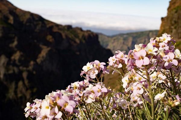 Panoramaweg Madeira