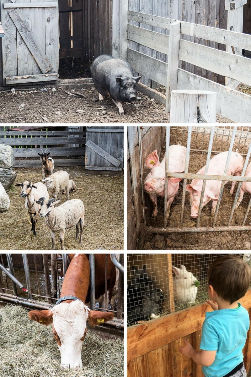 Tiere beim Schaubauernhof