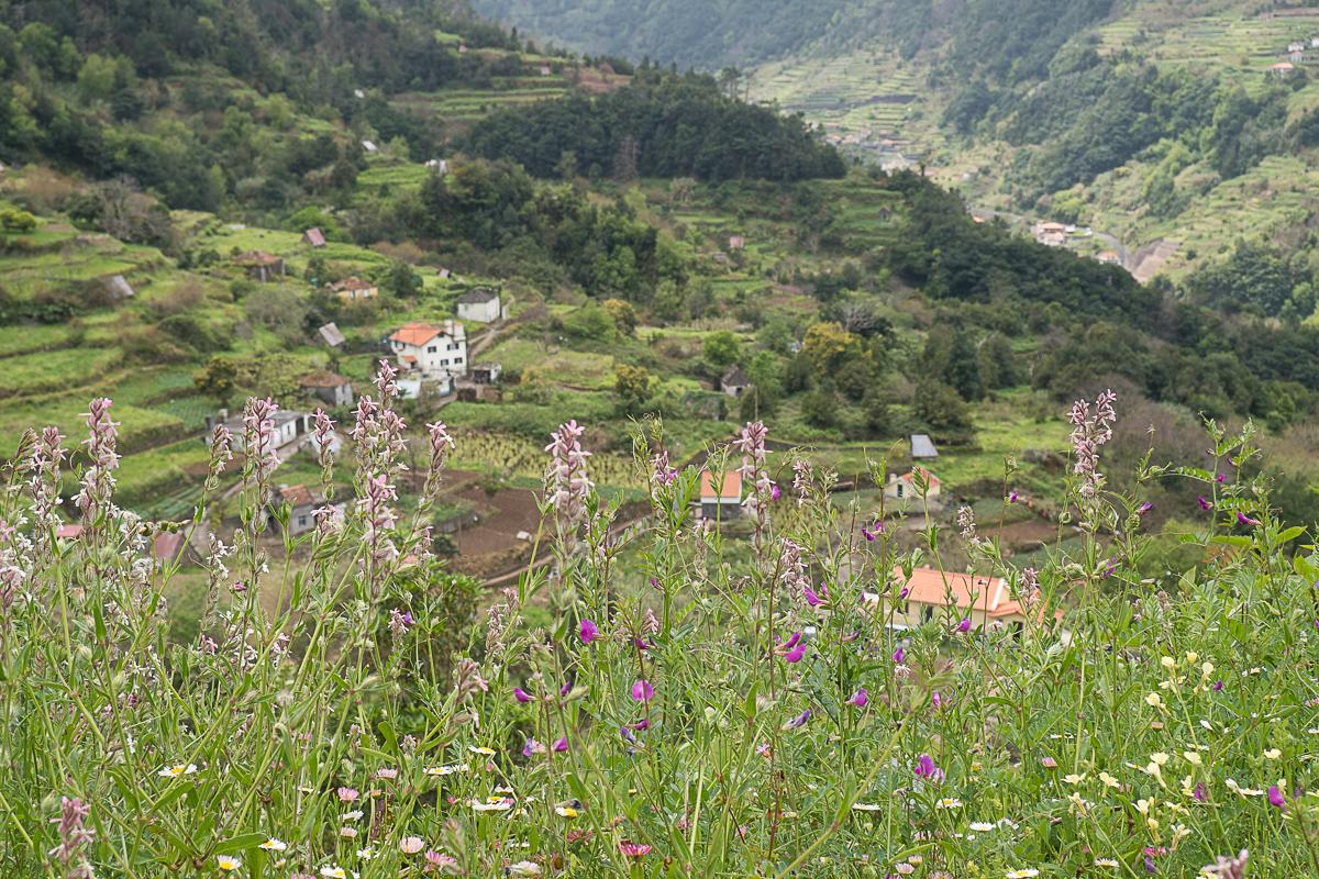 Terrassenkultur Madeira