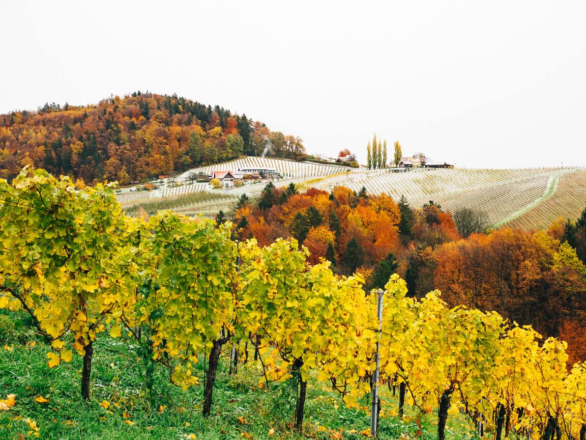 Gamlitz an der südsteirischen Weinstraße