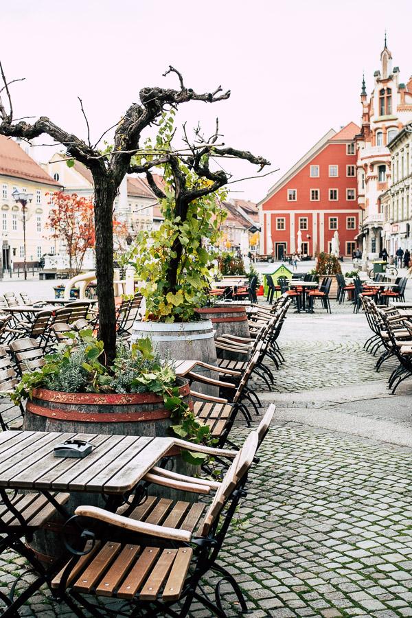Weinkultur in Maribor