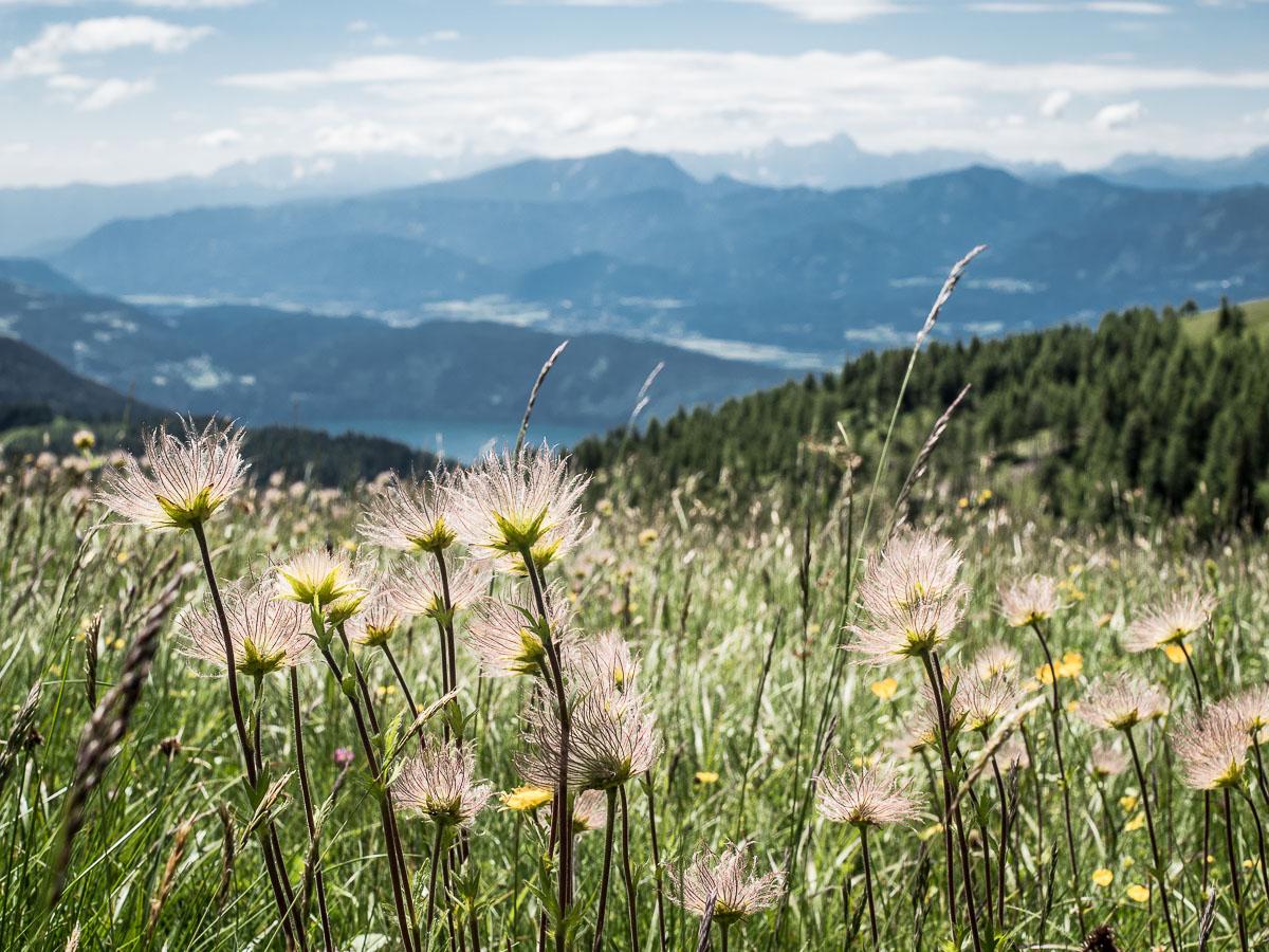 Wandern Kärntner Berge