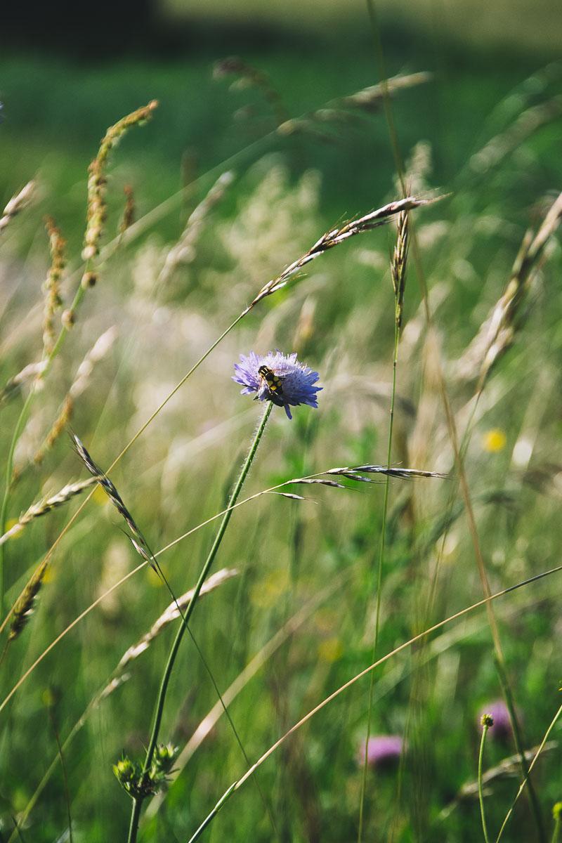 Fotografie-Nahaufnahme-Blumenwiese