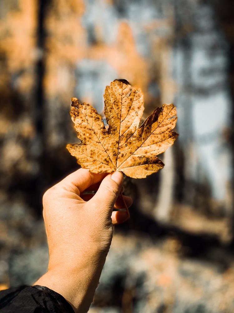 verfärbtes Herbstlaub