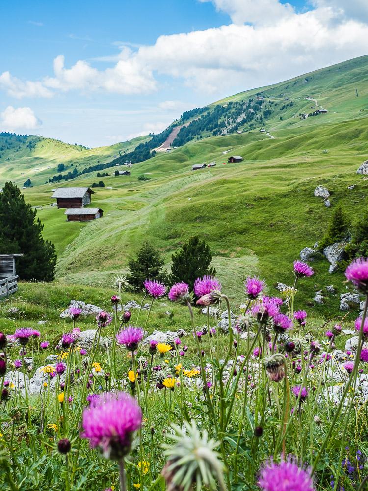 Col Raiser Alm Südtirol