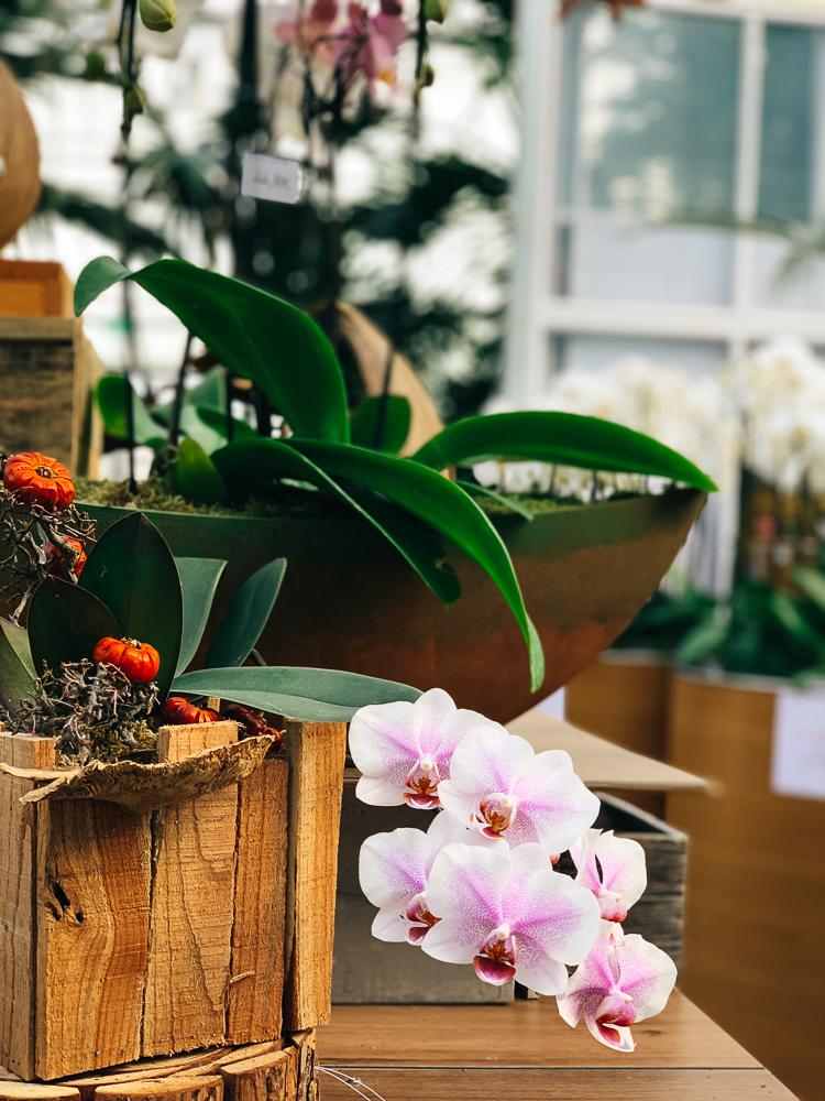 orchideen-dobrovnik