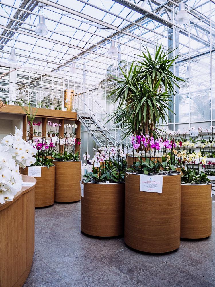 Shop-orchideen-dobrovnik-pomurje