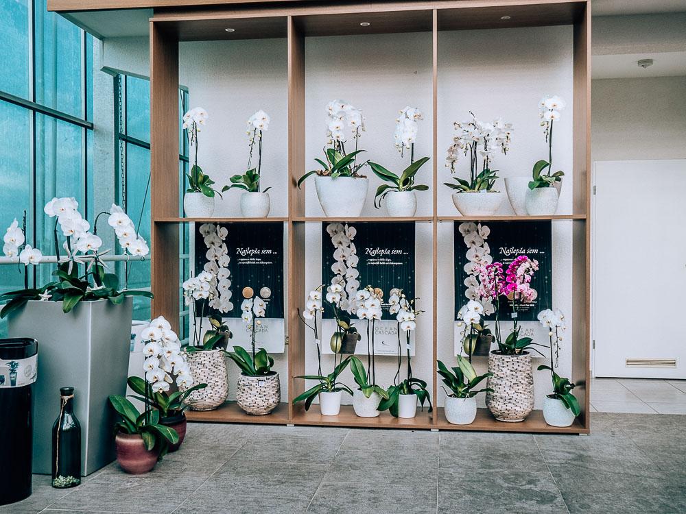 orchideen-kaufen-slowenien