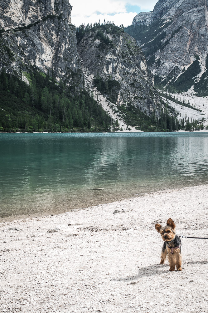 Ausflug-hund-prags