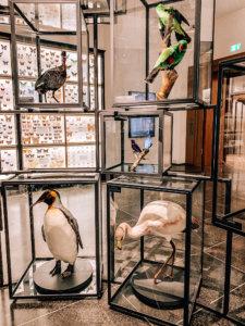 museum-wiesbaden-natur