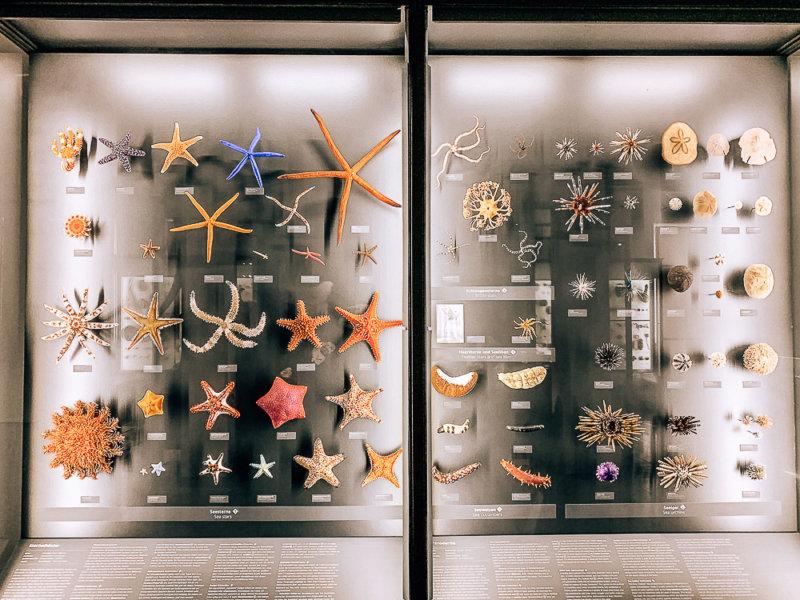 museum-wiesbaden-ausstellung